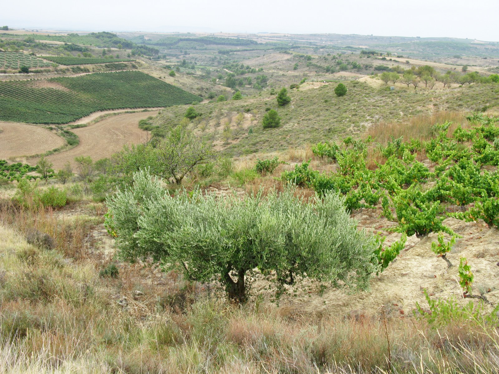 19 September 2008 – Los Arcos to Logrono