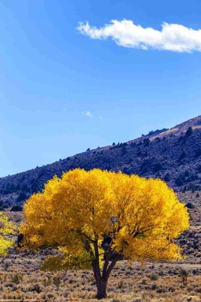 Print of a Tree with Yellow Leaves During Fall near Topaz Photo