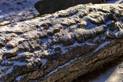Print of a Snow Covered Log near Reno Photo