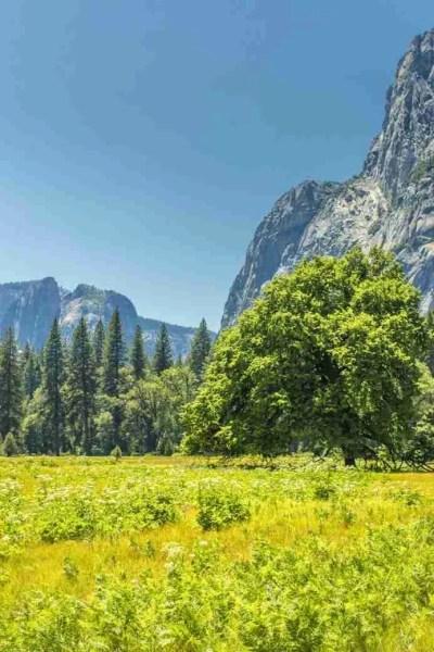 Photo of Spring Fields of Yosemite