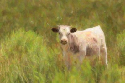 Print of a Young Cow Standing in the Grass