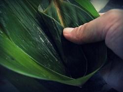 bamboo_leaves_ZongZi2
