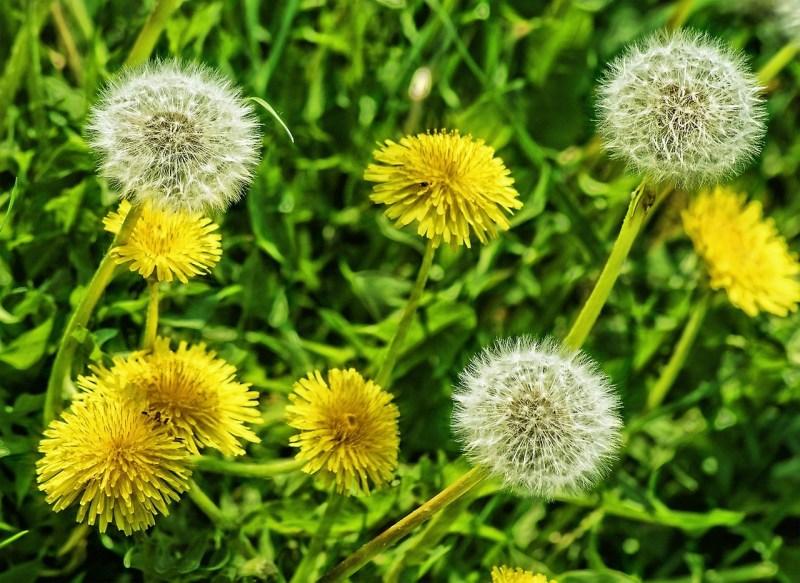 цветы зимних дней рождения