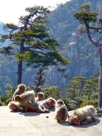 Macques, Itsukushima, Miyajima, Japon