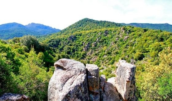 Foresta demaniale di Gutturu Mannu, Monte Arcosu, Sardaigne, Sardinia, Sardaigne