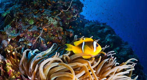 Coral Reef Coral Reef Fish Defenders Of Wildlife