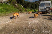 Wild bunch on the run