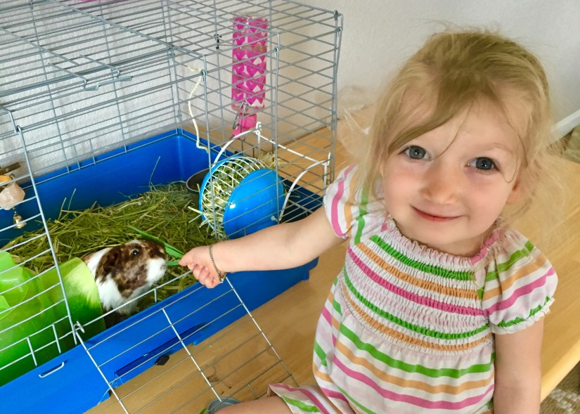 picture of a girl feeding a Guinea Pig