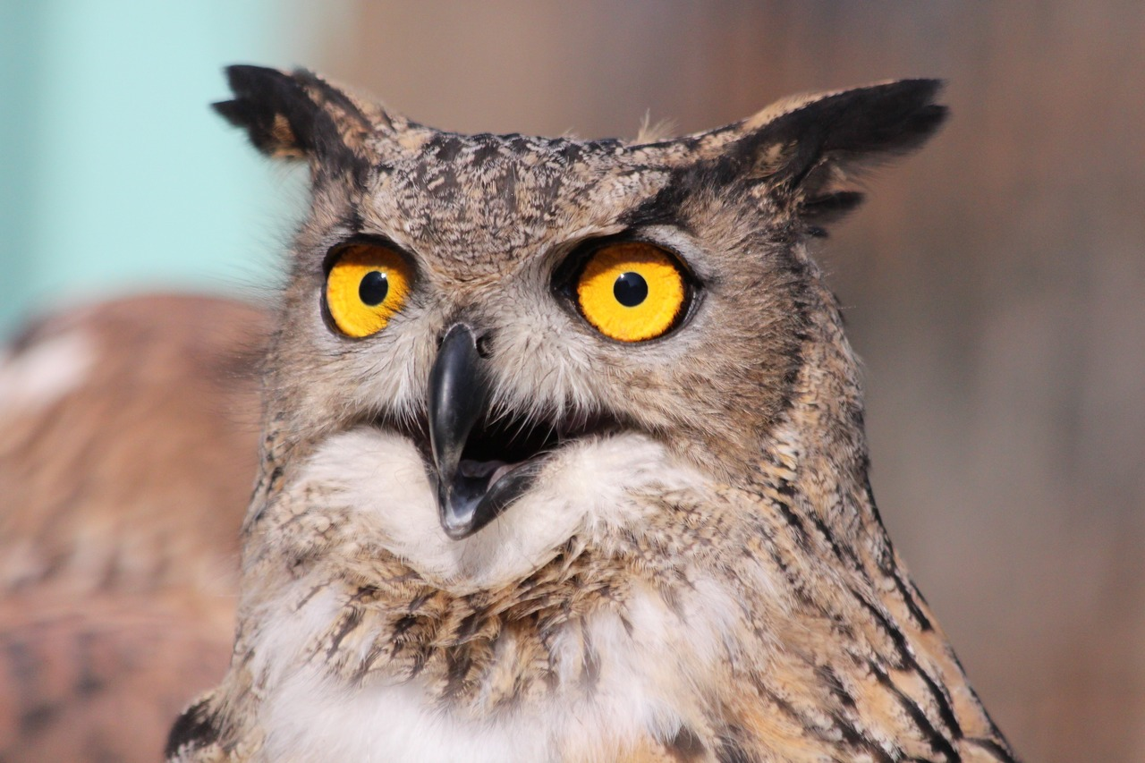 coruja marrom com olhos amarelos