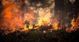 DéFI Gembloux dépose au Conseil communal une motion visant à soutenir les actions destinées à la protection de la forêt amazonienne