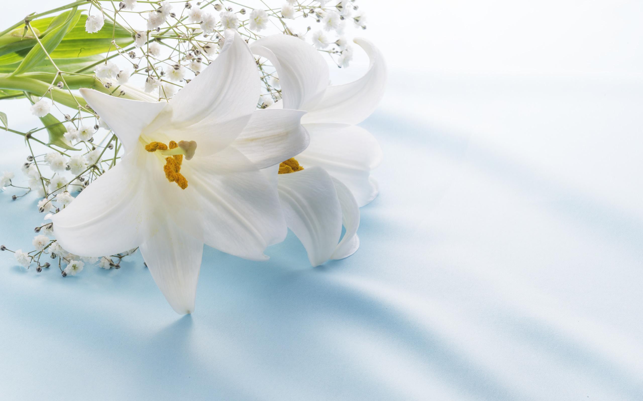 百合とかすみ草の花束(台風 21 号のお見舞い)