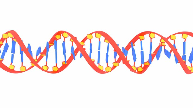 What is RNA? 3 Types, Function, and Structure, RNA and DNA
