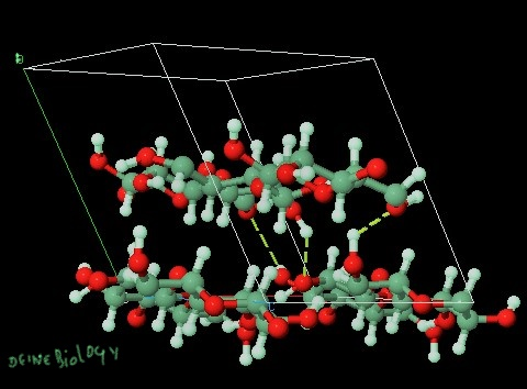 Define cellulose, Structure of cellulose, What are cellulases?