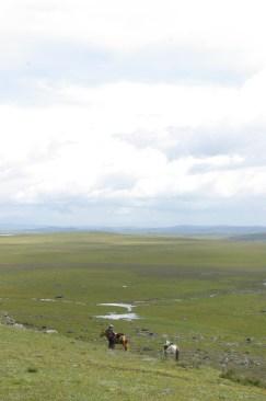 Wide Grassland