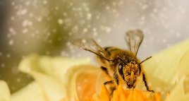 Préservons la biodiversité et luttons contre la disparition des abeilles