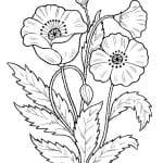 Dibujos De Plantas Silvestres Para Colorear Flores Silvestres