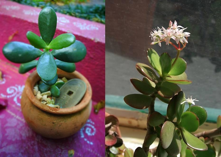 plantas que dão sorte - dicas de presentes