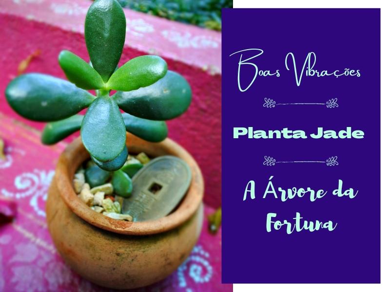 Boas Vibrações: Planta Jade, a Árvore da Fortuna