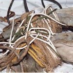 Neosho Grace Doe cords