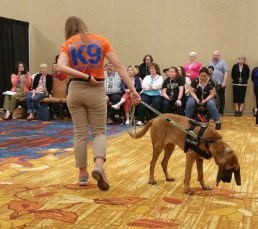 search and rescue dogs crimecon 2 500