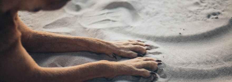 photo of dog laying on sand