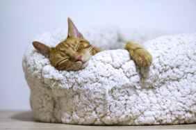 sleep to keep heart healthy