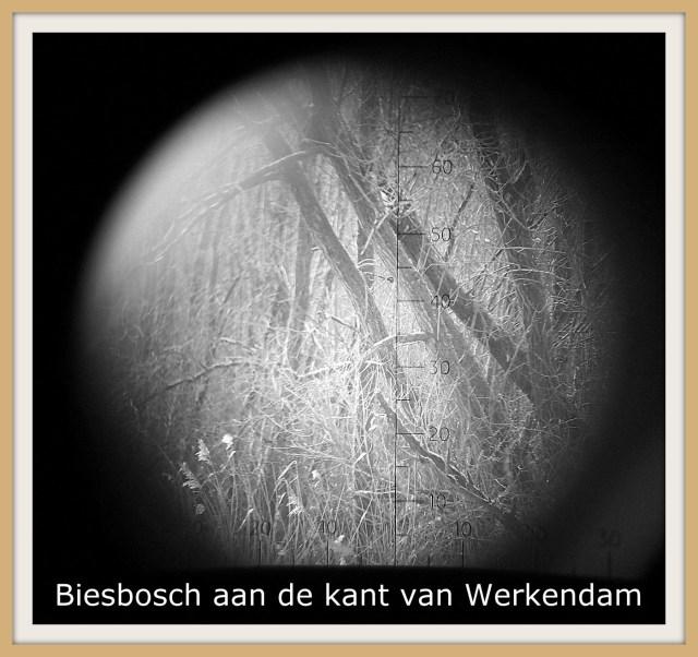 Met de Old Boys in de Biesbosch.