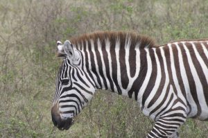 sebra safari groeiblog