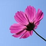 その花を咲かせることだけに 一生懸命になればいい