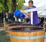 (Photo by Nicole Rodriguez: Grape Stomp)