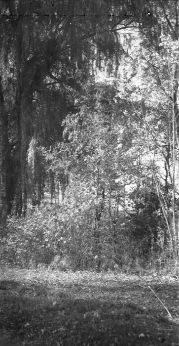 Film - 615 - 700