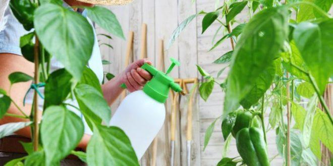 Bio Pestizide Naturheilkunde