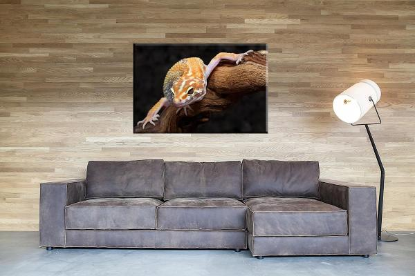 db_1743_gecko_couch-1