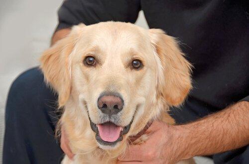 Ursachen Für Die Entfärbung Der Nase Beim Hund Deine Tiere