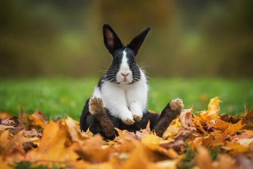 Originelle und kultige Namen für Kaninchen — Deine Tiere