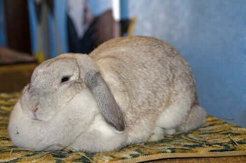Fettleibigkeit bei Kaninchen: Symptome und Ursachen — Deine Tiere