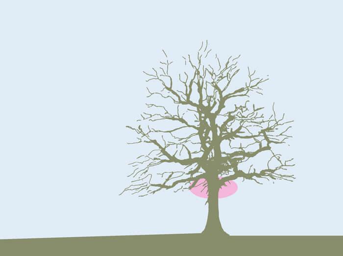 Der Schattenriss eines blattlosen Baumes mit Markierung am Übergang zwischen Stamm und Krone