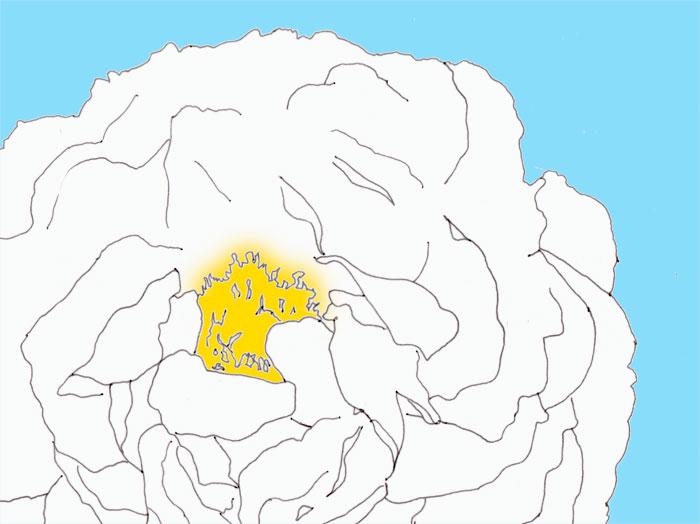 Halbgefüllte Rose 'Himmelskleid', skizziert, coloriert