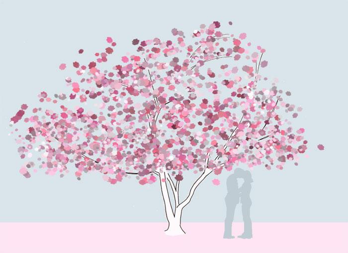 Grafik Prunus serrulata 'Kanzan' - mehrstämmig