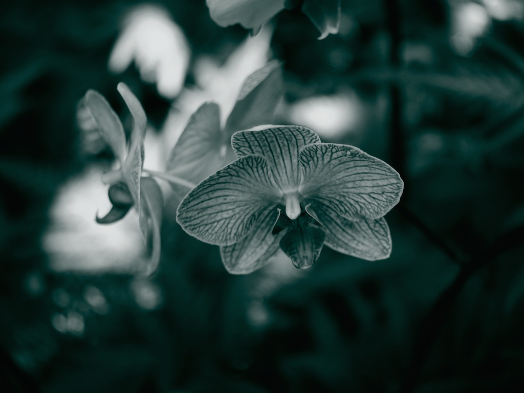 HawaiiOrchid-small