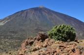 Blick von der Fortaleza-Hochebene (2159 m) zum Teide (3718 m)