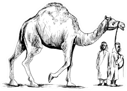Arab Man Standing With A Camel, Hand Drawn Sticker