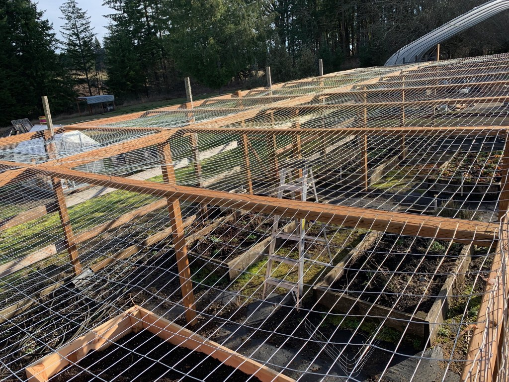 Berry cage roof wire