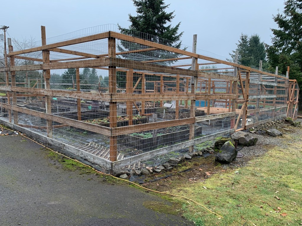 Berry cage fencing