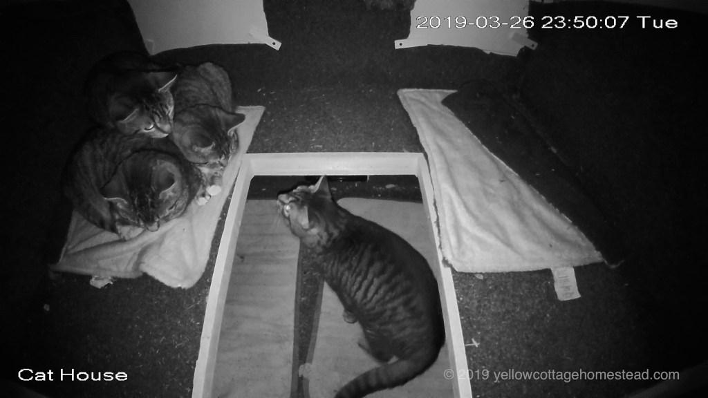 Cats inside shelter