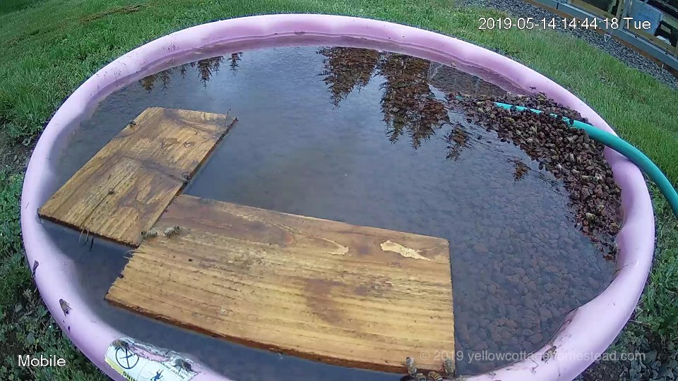 Bee water pool