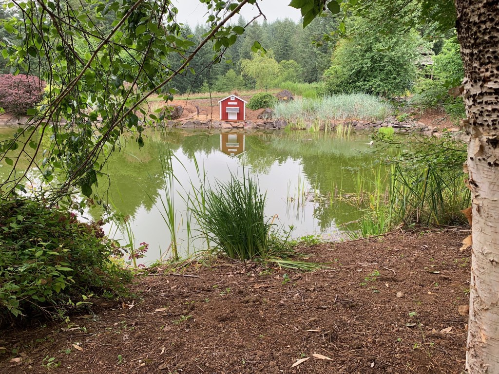 Pond and duck house