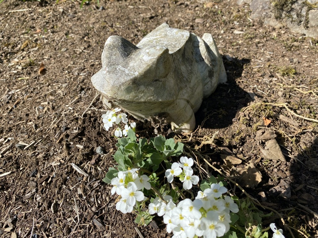 Stone frog and flowers