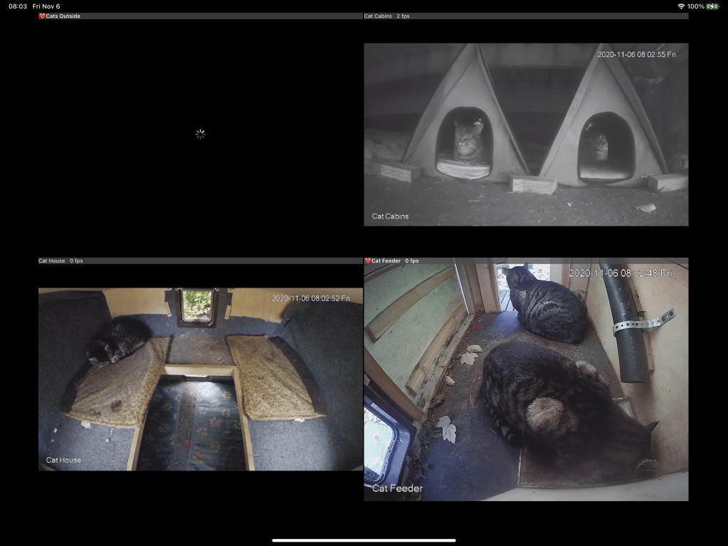 Cat cams screenshot