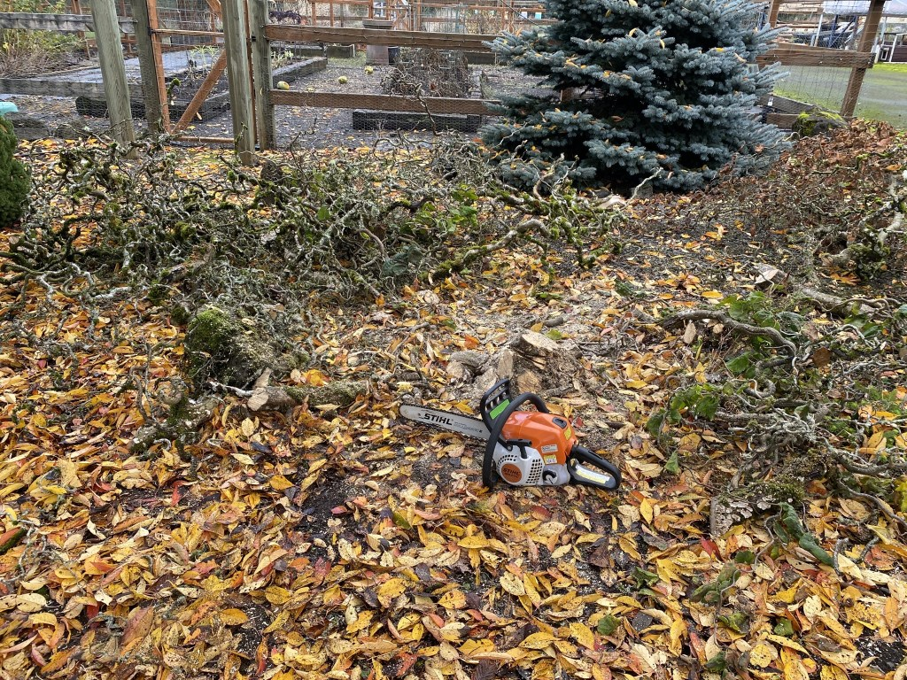 Chainsaw and chopped tree